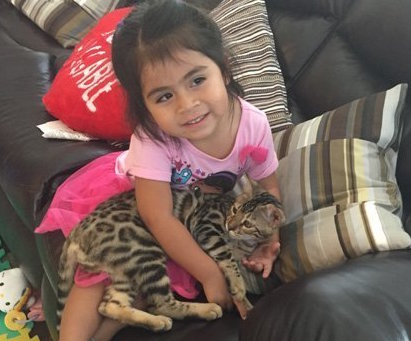 little kid cuddling with bengal kitten