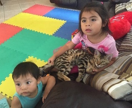 little kids cuddling with bengal kitten